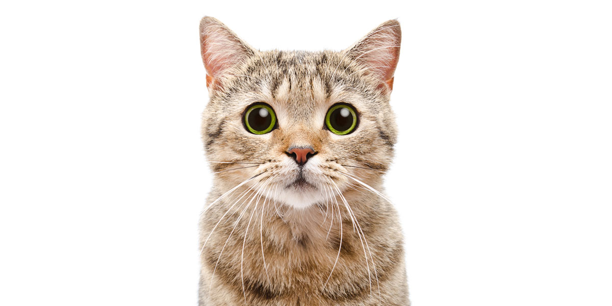 Lakeba Group – Whiskas Catstacam campaign